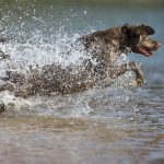 DIY Duck Dog: Hit the Mark: Marking Concepts to Prep for Duck
